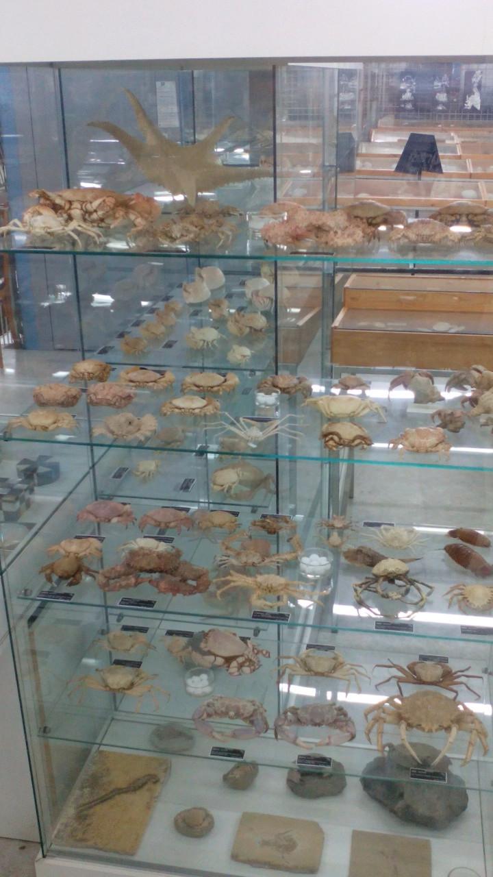 Museo Malacologico Cupra Marittima Img_2041