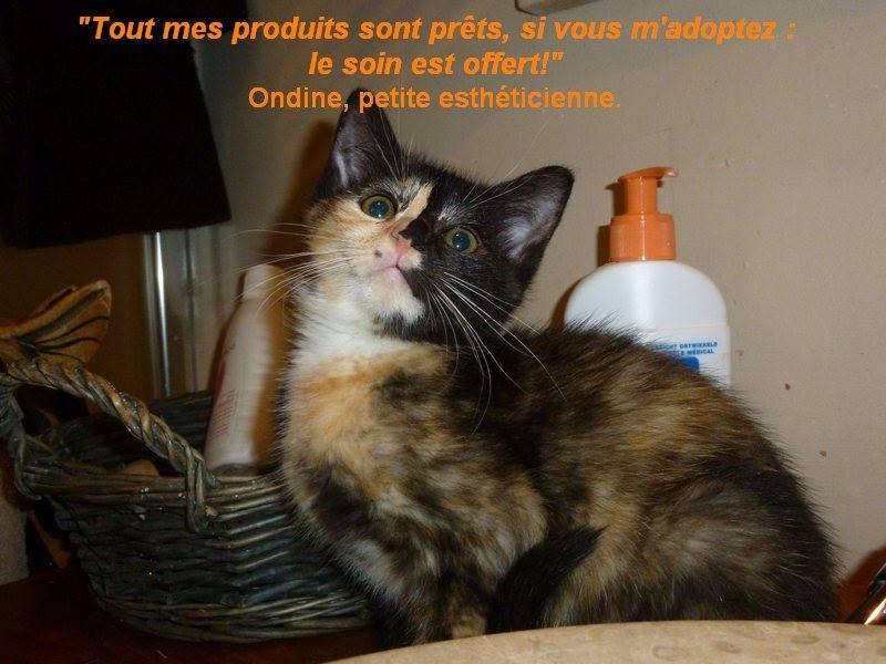 ONDINE, adorable chatonne écaille de tortue de 2 mois Ondine11