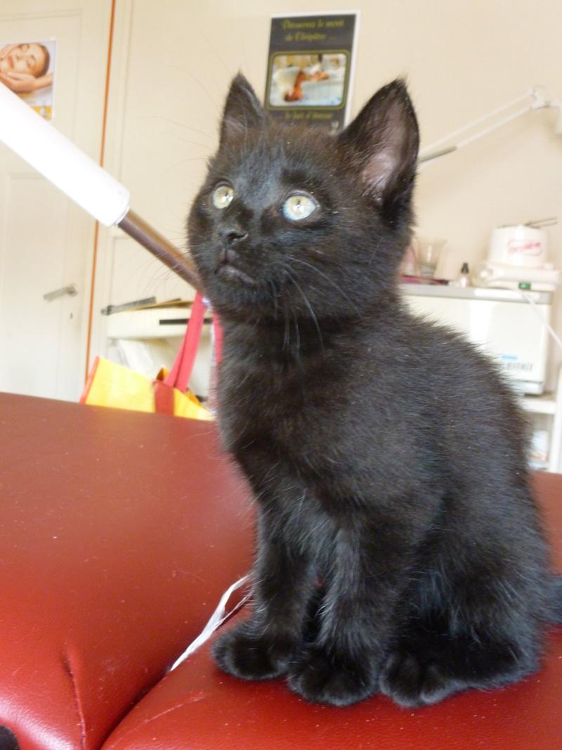DESIRE, adorable chaton de deux mois complètement yang P1030331