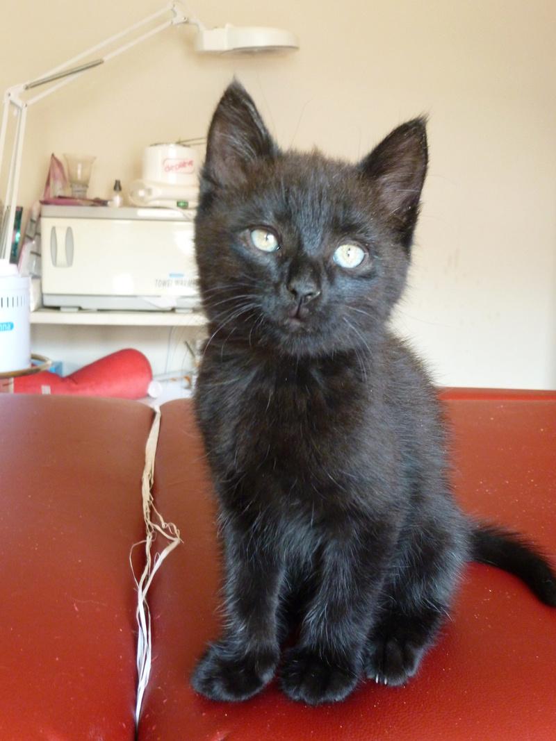 DESIRE, adorable chaton de deux mois complètement yang P1030333