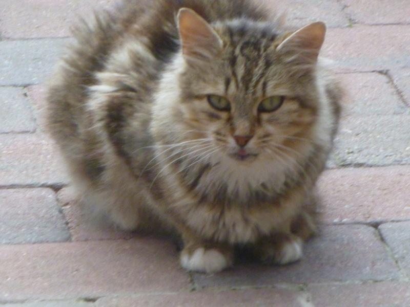 PEANUTS, belle petite chatte renversée par une voiture P1030412