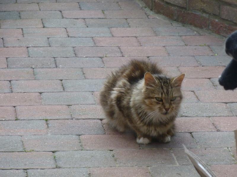 PEANUTS, belle petite chatte renversée par une voiture P1030414