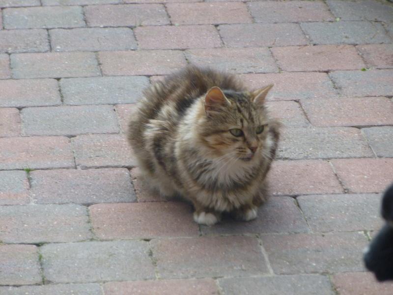 PEANUTS, belle petite chatte renversée par une voiture P1030415