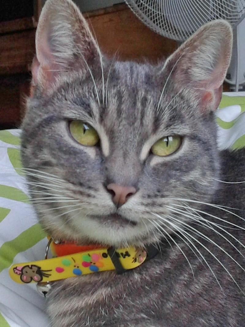 OLIVER, adorable chaton de 4 mois blanc et noir Wp_00110