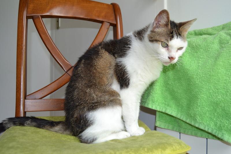 Poussy, femelle marron et blanche née le 1 juin 2002 - Page 3 Dsc_1011