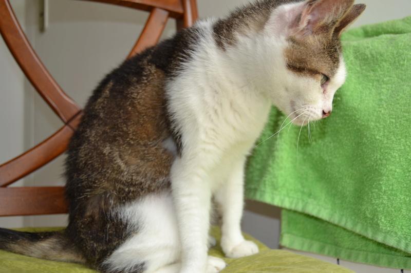 Poussy, femelle marron et blanche née le 1 juin 2002 - Page 3 Dsc_1012