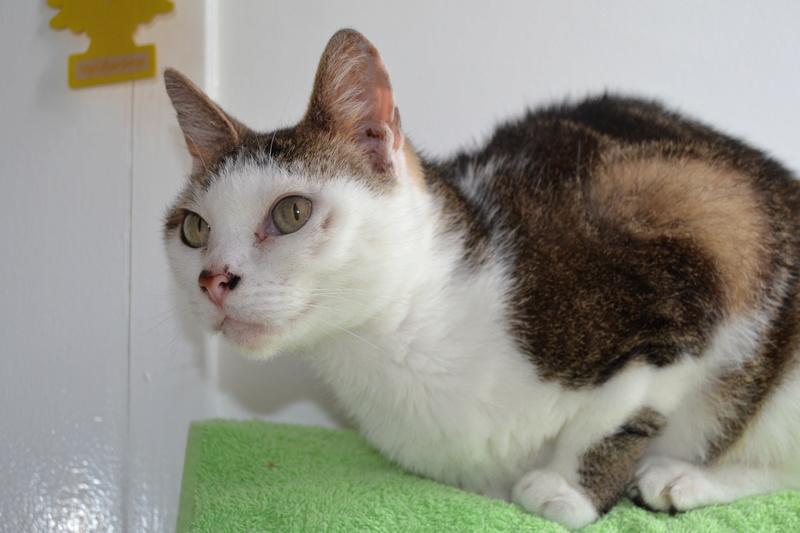 Poussy, femelle marron et blanche née le 1 juin 2002 - Page 3 Dsc_1013
