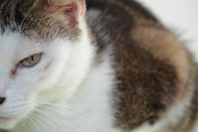 Poussy, femelle marron et blanche née le 1 juin 2002 - Page 3 Dsc_1111