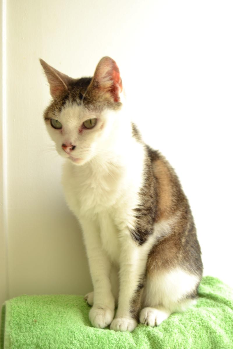 Poussy, femelle marron et blanche née le 1 juin 2002 - Page 3 Dsc_1112