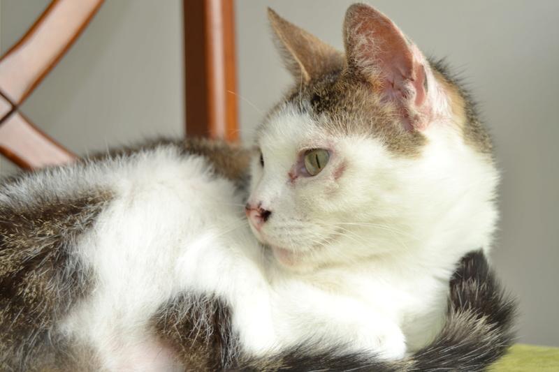 Poussy, femelle marron et blanche née le 1 juin 2002 - Page 3 Dsc_1114
