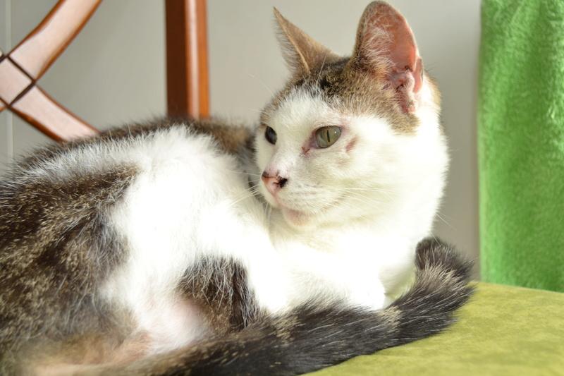 Poussy, femelle marron et blanche née le 1 juin 2002 - Page 3 Dsc_1115