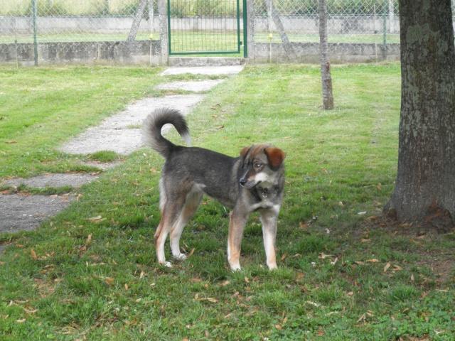 Nebraska husky x berger née 2009, ASSO 94  - Page 2 P7120514