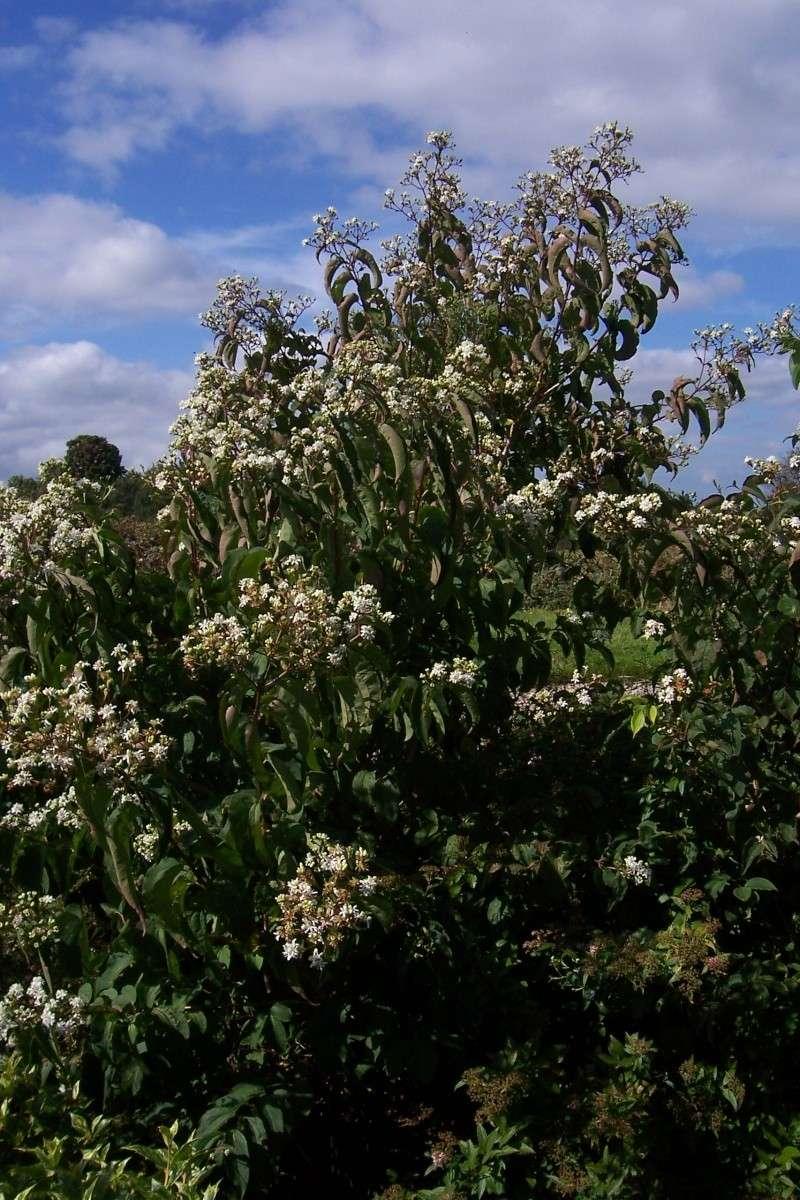 plantes mellifères : les meilleures plantes à insectes de vos jardins  100_1212
