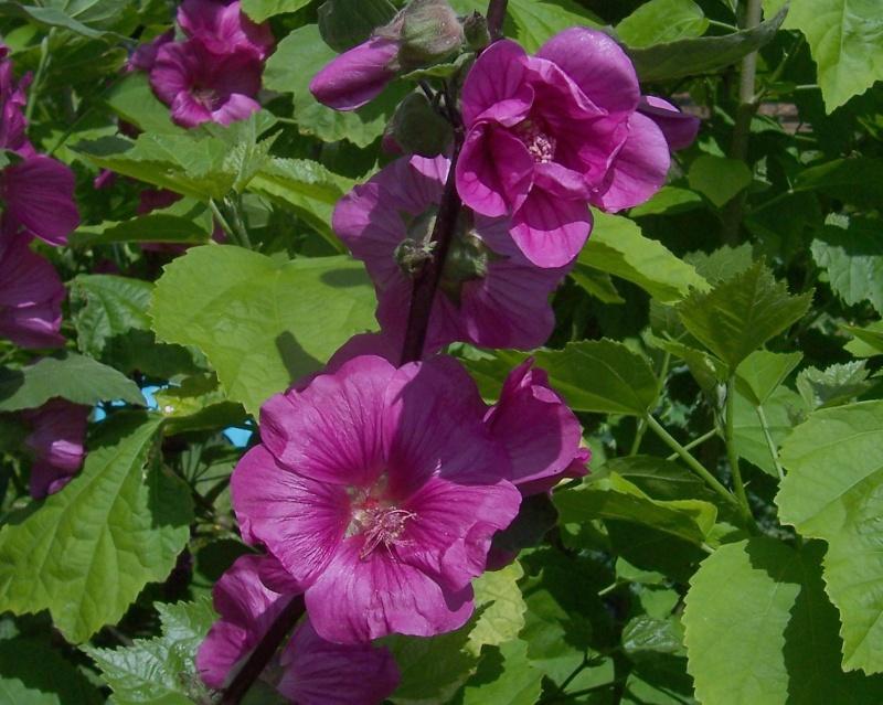 cadeaux du jardin, juin juin - Page 3 100_8111