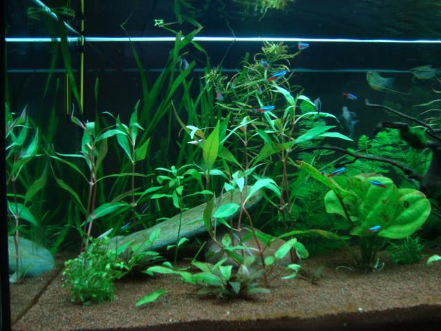 mon aquarium  180l Dsc05416