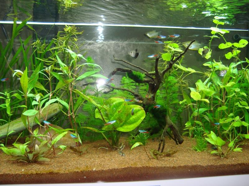 mon aquarium  180l Dsc05417