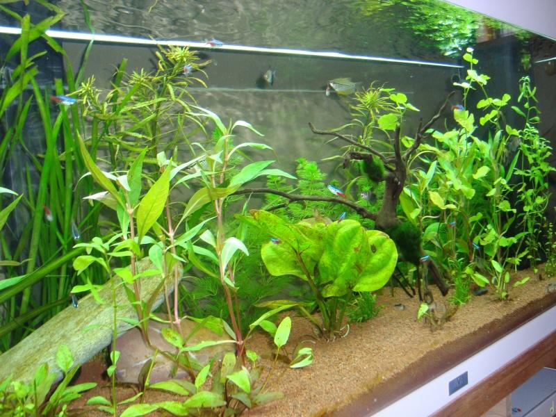 mon aquarium  180l Dsc05418