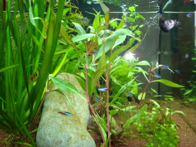 mon aquarium  180l Dsc05419