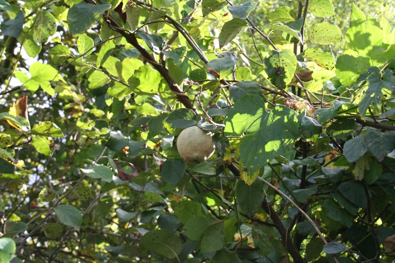 Les fruits d'automne 2012_022