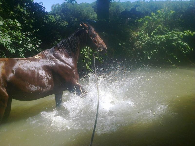 de l eau ! Photo315