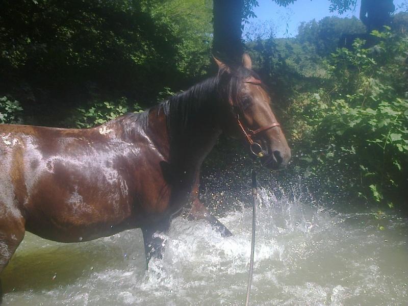 de l eau ! Photo317