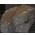 Escargot Marbré => Dalle Marbre Blanc / Dalle Marbre Noir / Dalle Marbre Bleu / Dalle Marbre Rose Blackm12