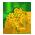 Arbre Cassia => Fleur de Cassia Golden10
