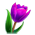 Ruche Royale => Gelée royale Purple10