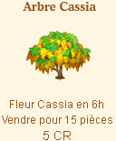 Arbre Cassia => Fleur de Cassia Sans_162