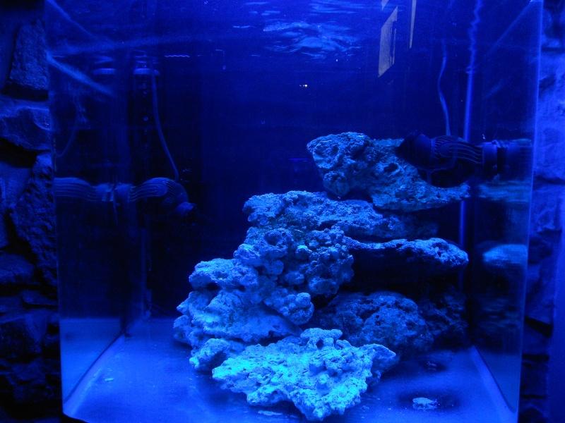Mon petit récif Dscn0810