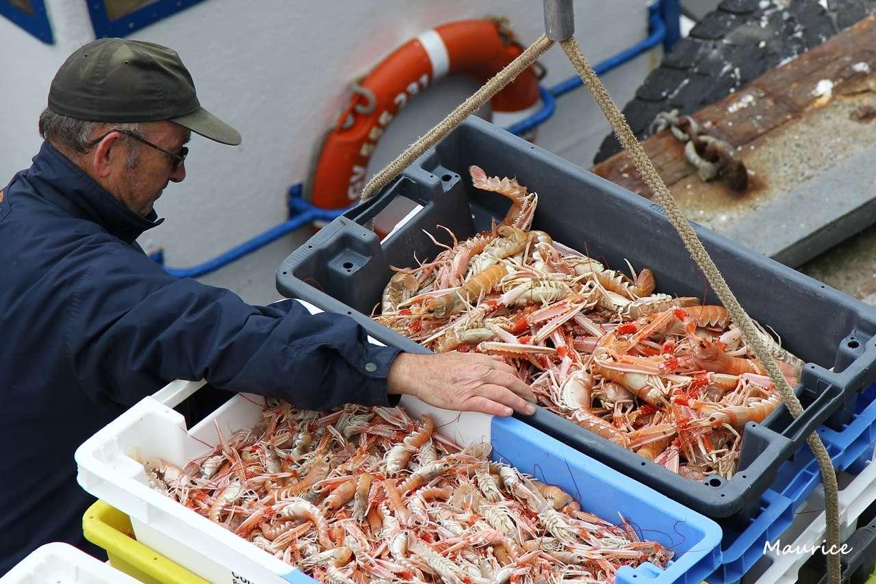 Le Guilvinec et St Guénolé ports de pêche du Pays Bigouden Img_7810