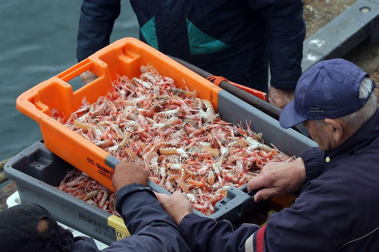 Le Guilvinec et St Guénolé ports de pêche du Pays Bigouden Img_8710