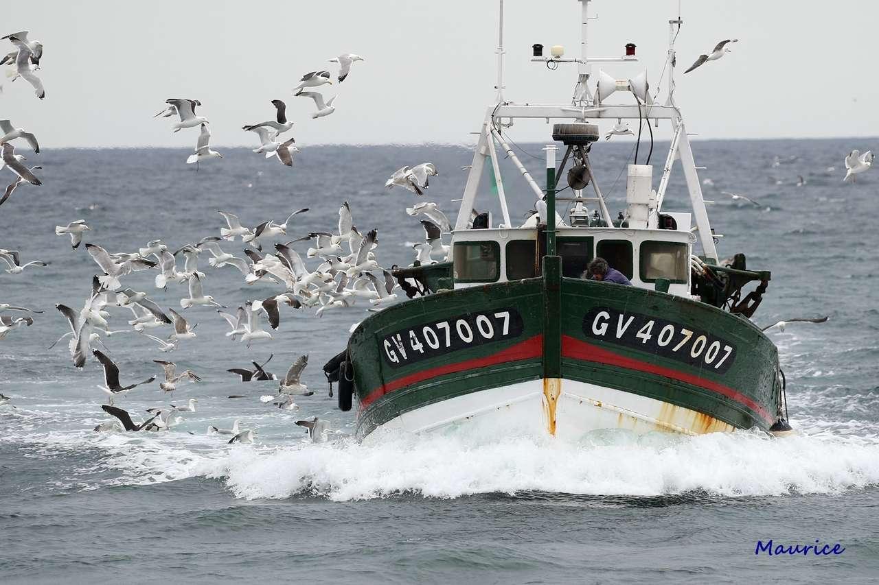 Le Guilvinec et St Guénolé ports de pêche du Pays Bigouden Img_9610