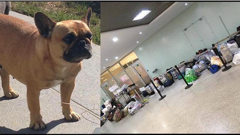 PETITION- Justice pour mon chien Pytiti10