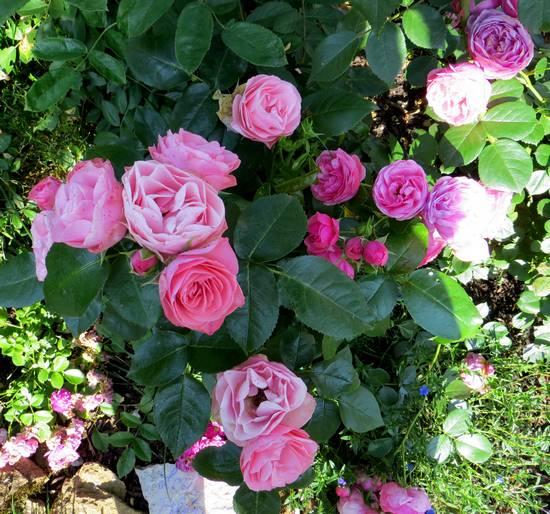 rosier bouquet de mariée Bouque10