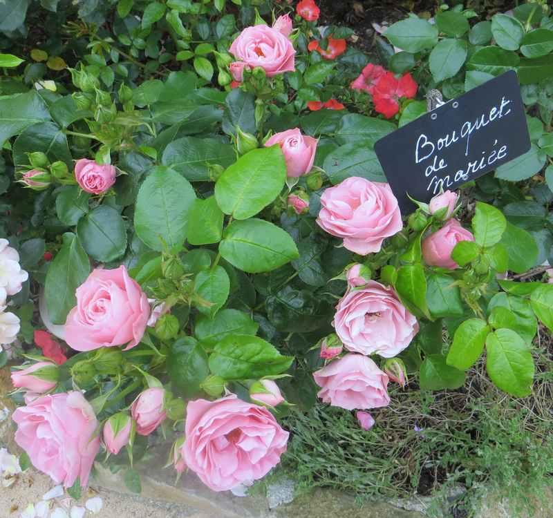 rosier bouquet de mariée - Page 2 Bouque12