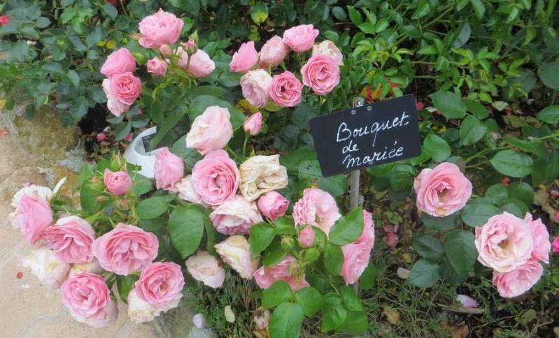 rosier bouquet de mariée - Page 2 Bouque15