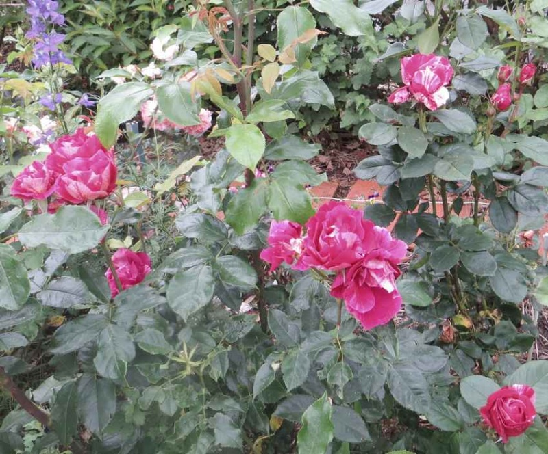 rosier Guy Savoie Guy_sa12
