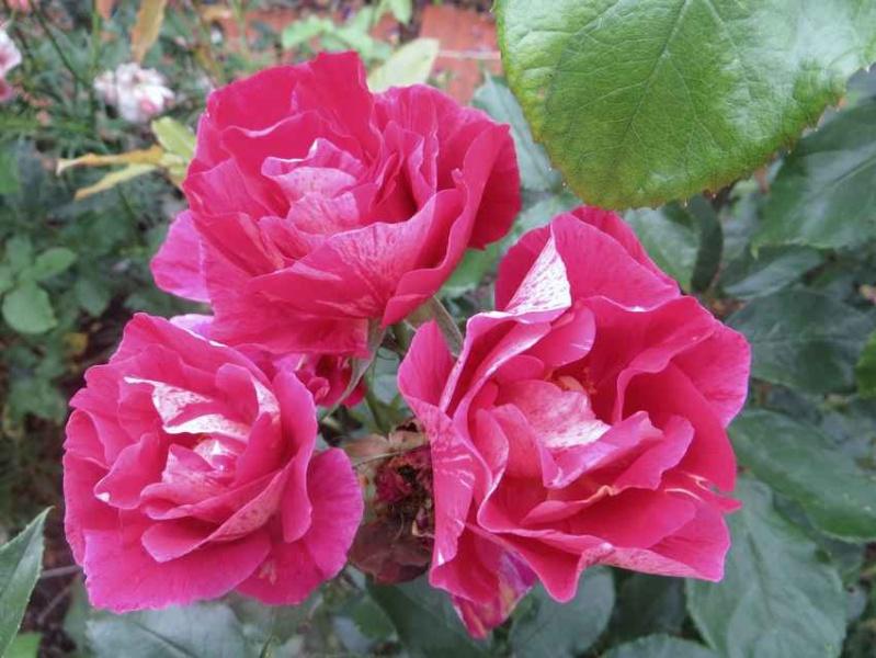 rosier Guy Savoie Guy_sa13