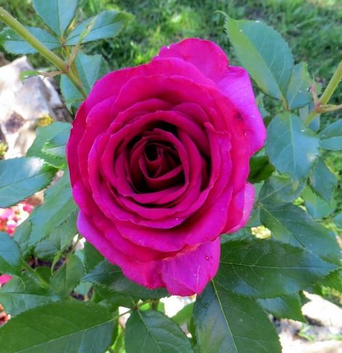 rosier Régis Marcon Img_0329