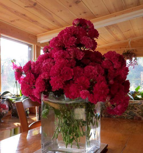 le bouquet du jour.... Img_0521