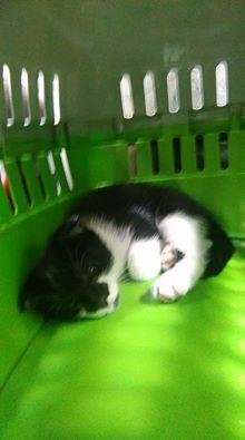 MOOKIE, chaton mâle, 2 mois Mookie10
