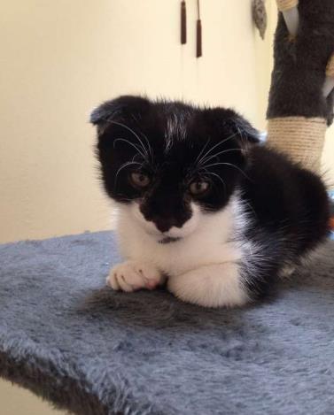 MOOKIE, chaton mâle, 2 mois Mookie11