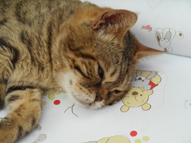 Week-end Handi'cats Dscn3514