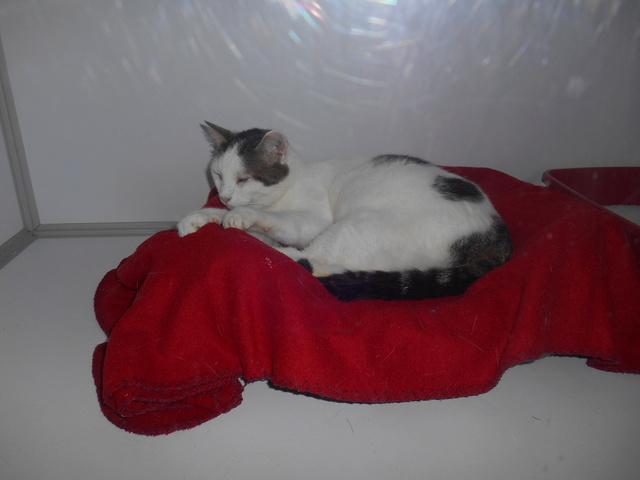 week end Handi'Cats Dscn3614