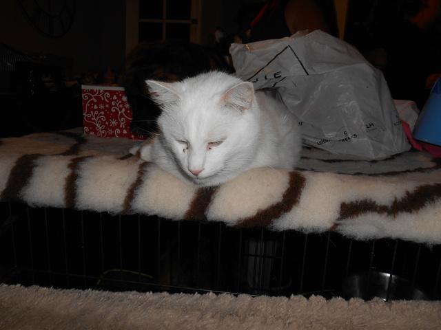 week end Handi'Cats Dscn3620