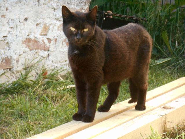 week end Handi'Cats Dscn3621
