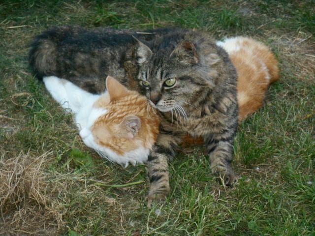 week end Handi'Cats Dscn3624