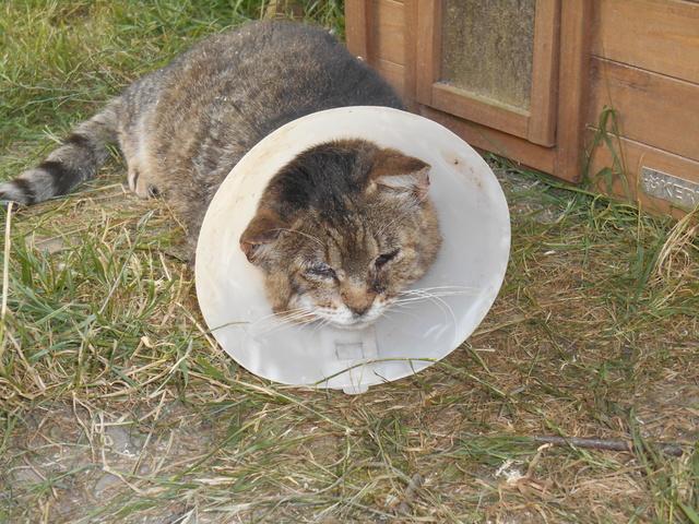 week end Handi'Cats Dscn3630