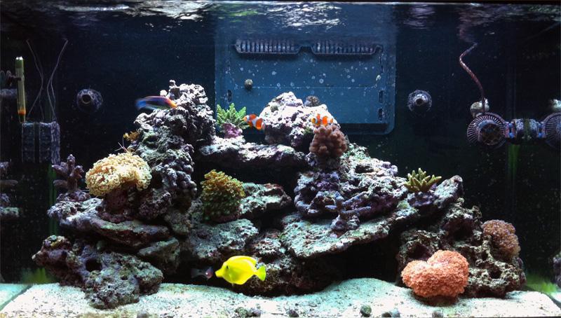 """Le Red Sea Max 250 de """"Kust"""" Ensemb11"""